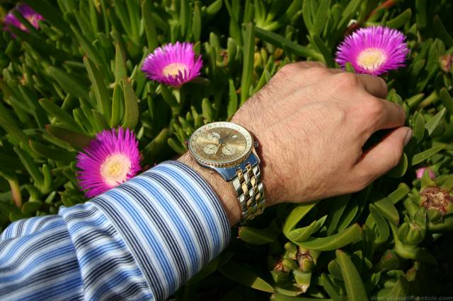 Navitimer on wrist with flowers (nav_tt_wrist_flowers.jpg)